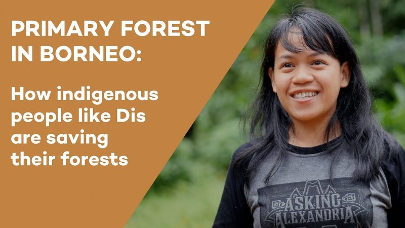 Primary forest in Borneo - an interview with Disrekia