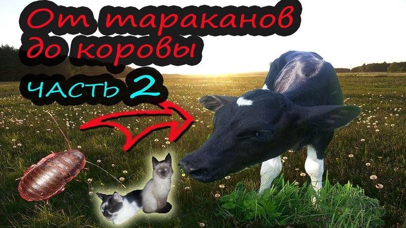 От тараканов до коровы Часть 2 Котики Жизнь в деревне