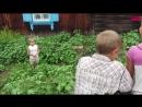 Сказка о страшном сорняке и о дружной команде. (08.17г.) Веселая Анюта (Бровченк