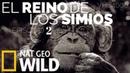 El reino de los simios, 2 de 2, duelo de reyes, documental en Español de National Geographic en HD.