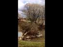 дерево срубили