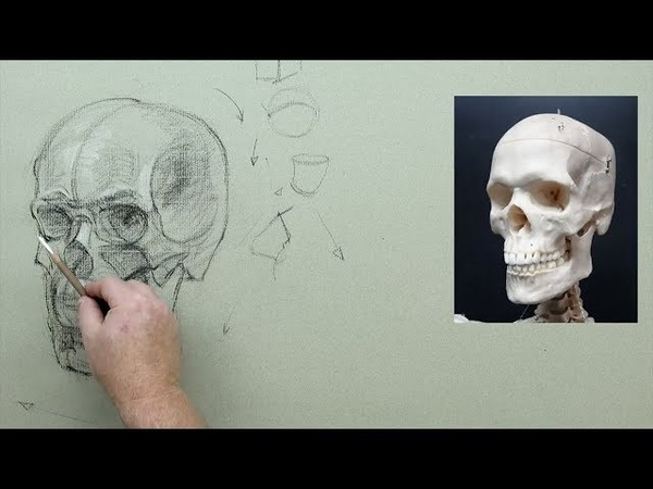 ANATOMY FOR ARTISTS Head Neck Synced version