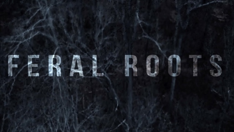 Rival Sons - Feral Roots (Official Visualizer)