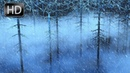 BEST FOREST RAIN BLIZZARD STORM SOUND WHITE NOISE FOR SLEEP