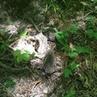 """Svyat Sat on Instagram На лесной тропинке повстречали трёх ежат лес природа я свобода ежата ежик животные лесные Новороссийск"""""""