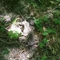 Svyat Sat on Instagram На лесной тропинке повстречали трёх ежат. #лес, #природа, #я, #свобода, #ежата, #ежик, #животные, #лесные, #Новороссийск