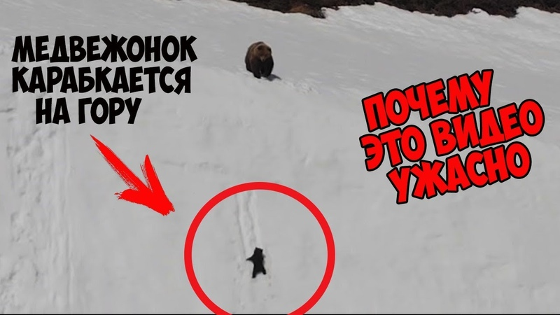 Почему видео с медвежонком, поднимающимся на гору, это не трогательно, а ужасно
