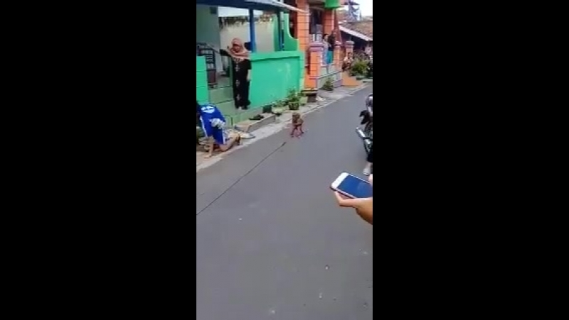 MACACO BARBEIRO ATROPELA SER HUMANO QUE ESTAVA ANDANDO DISTRAIDO AO SOM DA CUÍCA DOS VIZINHOS E SAI COMO SE NADA TIVESSE ACONT