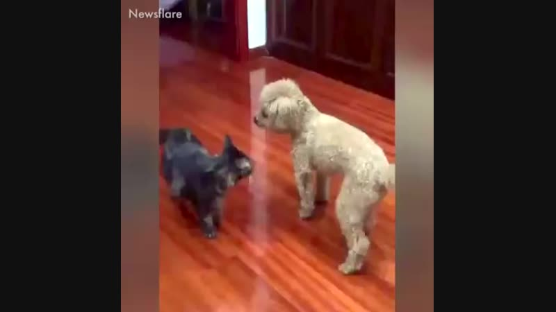 If animals are annoying each other