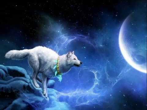 Волки Белая Волчица