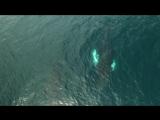 Наблюдение за китами-горбачи! Камчатка, Авачинский залив Тихого океана!