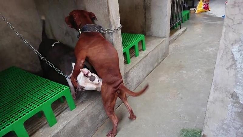 DOG LOVERS PHILIPPINES Public