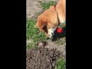 Doggo meets gopher