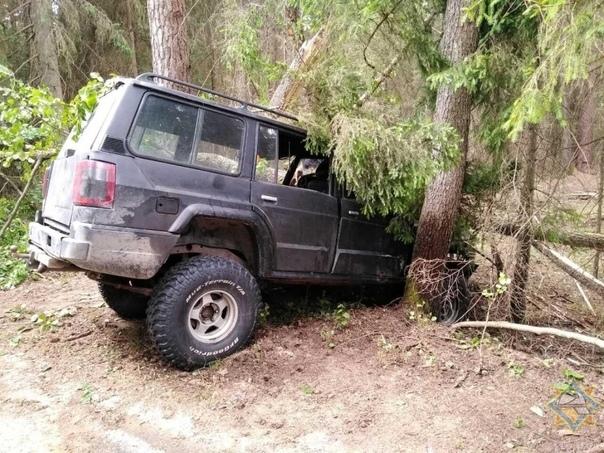 Водитель в Беловежской пуще объезжал выбежавшее на дорогу животное и столкнулся с деревом