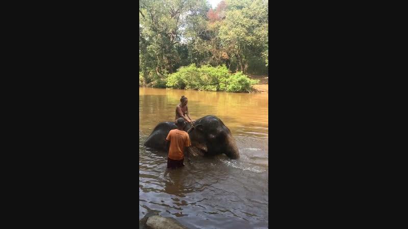 Купание со слоном Goa