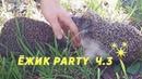 Ежики знакомятся, выясняют отношения, влюбляются! Ежик Party в парке Сокольники. Еж, ежи.
