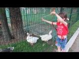 Дрессировщица гусей