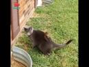 Лайфхак для грызунов у кошек на спине слепое пятно