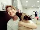JinJin Dogs cafe