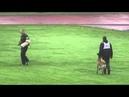 FMBB World Championship 2014 Finland Orkan vom Furher Moor C disqualifed