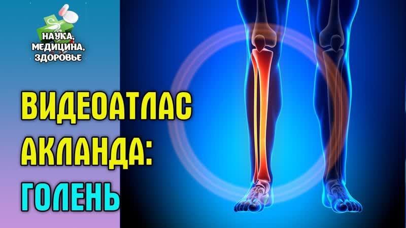 Анатомия человека. Видеоатлас доктора Акланда. Голень и лодыжка.