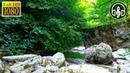 Звуки Природы: Шум Леса, пение птиц, звуки ручья. 6 Часов для сна и расслабления.