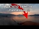 Да что за ПИРАНЬИ там Рыбалка на Эгейском море.Rockfishing