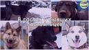 Собаки-охранники из приюта Право на жизнь обрели новый дом