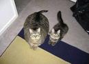 Встречаются два кота. Один жирный, здоровый, лоснящийся. Другой тощий,