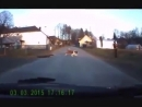 St. Bernard dog DRAGS a child across the road.
