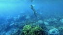 Best Place to Dive and Walk in the Jungle!