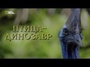 Nat Geo Wild Птица-динозавр 1080р