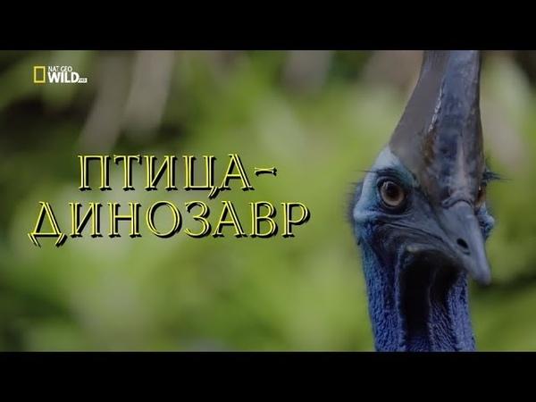 Nat Geo Wild: Птица-динозавр (1080р)