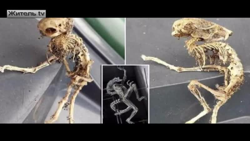 В Великобритании обнаружен скелет феи и женщина, прожившая 7 лет в пещере эльфов_(VIDEOMEG.RU)
