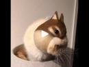 Ужасный зверь УкОтаБелка классика жанра 😆👒 кот в шляпе монстр мозг сломался