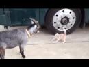 Кошка — самый страшный в мире зверь.