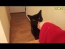 Приколы с животными 2018 Смешные Кошки и Собаки Прикольные Видео про Кошек .mp4