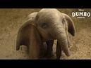 «Дамбо» (ТВ-спот: Generations)