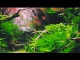 A Beautiful Aquascape with live Aquarium plants Cinematic Short