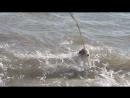 Меня удивила маленькая собачка, которая так бесстрашно плавает в морских волнах