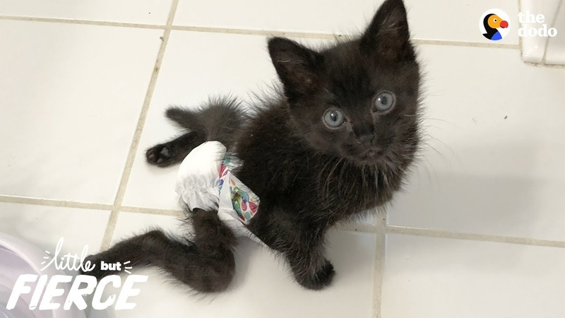 Paralyzed Kitten Is Sassiest Cat Her Foster Mom's Ever Seen - RAVEN | The Dodo