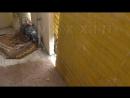 [День 7] - НОВОРОЖДЁННЫЕ ПТЕНЦЫ КРУПНЫМ ПЛАНОМ - ставлю первую баррикаду для голубей на нашем балконе