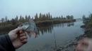 10 забросов подрят и все рыбные я в шоке! Бешеный утренний клев окуня на Larva lux