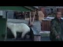 Нелегенда про медведей в России