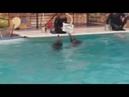 Дельфинарий в Грозном