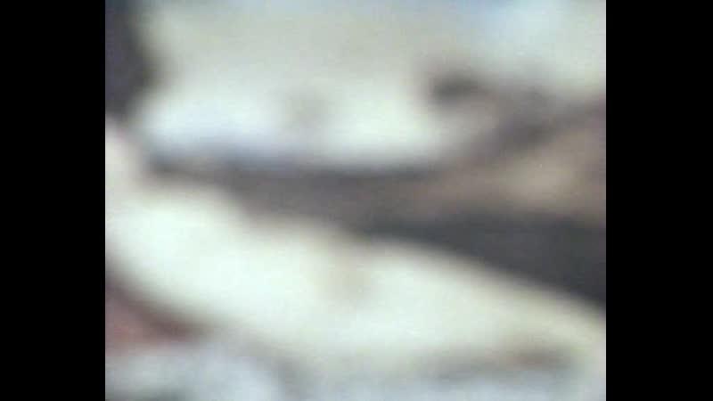 В поисках идеала прекрасного человека (1982) (Центрнаучфильм)