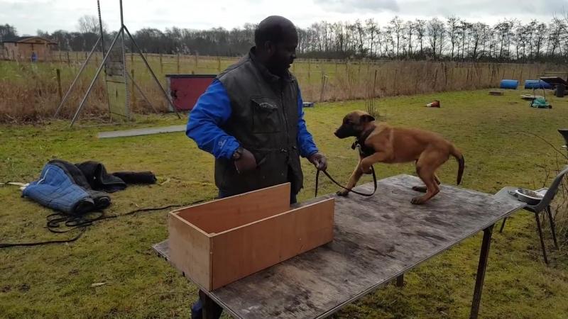 Training mondioring positions