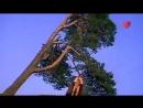 Песни Нашего Кино -- Констанция -- Москва 24 ...