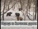 Камчатские зарисовки медведи косатки икра и олени Kamchatka bears caviar and deers