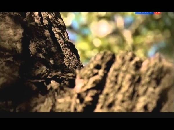Атланты - в поисках истины 23 серия История с географией или как влияет климат 01.12.2012.avi